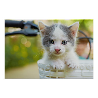 Kitten In A Basket On A Bicycle Poster
