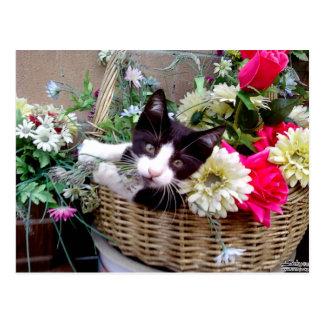 Kitten in a Basket Postcard