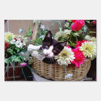 Kitten in a Basket Sign