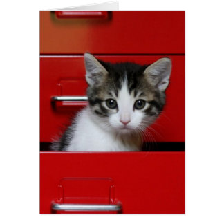 Kitten in a red drawer greeting card