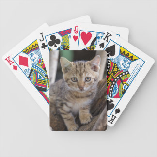Kitten in a Tree Bicycle Playing Cards