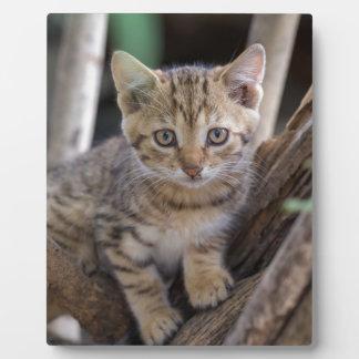 Kitten in a Tree Plaque