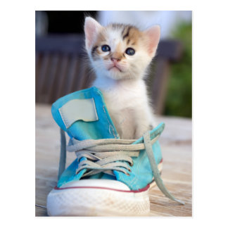 Kitten In Blue Shoe Postcard