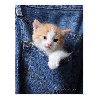 kitten in jeans bag postcard