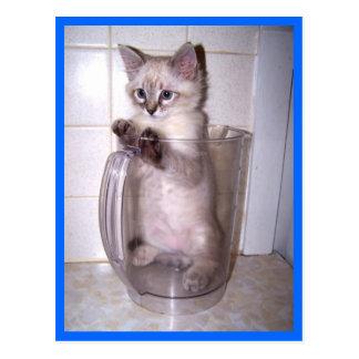 kitten in pitcher postcard