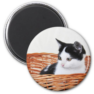 Kitten in the basket 2 inch round magnet