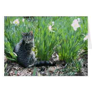 KITTEN IN THE GARDEN CARD