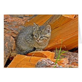 Kitten in the woodpile card