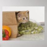 Kitten inside grocery bag