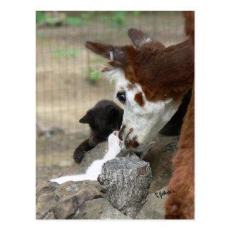Kitten Kisses for Alpaca Postcard