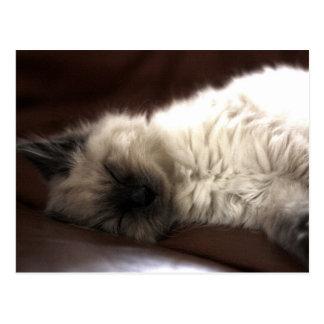 Kitten/Kitten Postcard
