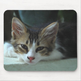 Kitten - Lazy Afternoon Mouse Pad