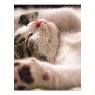 kitten letterhead