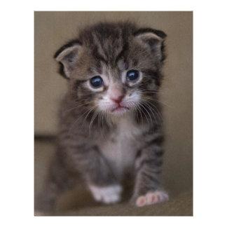 kitten letterhead design