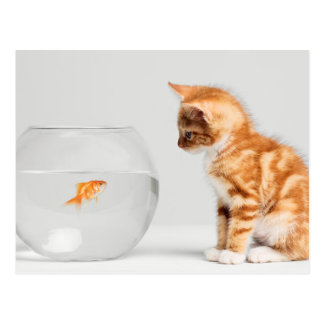 Kitten Looking At Fish In Bowl Postcard