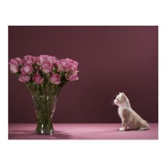 Kitten looking at vase of roses postcard