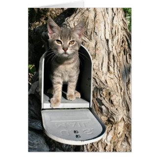 Kitten mail card