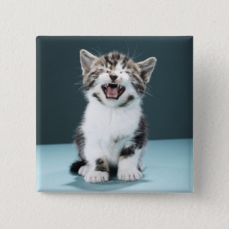 Kitten meowing 2 inch square button