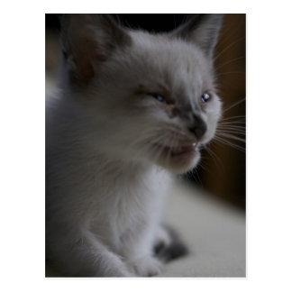 Kitten Meowing Postcard