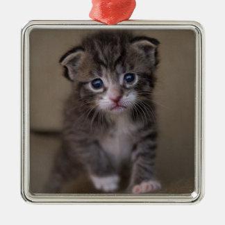 kitten metal ornament