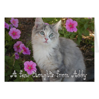 Kitten Note Card