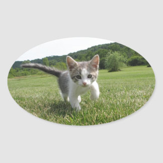 kitten oval sticker