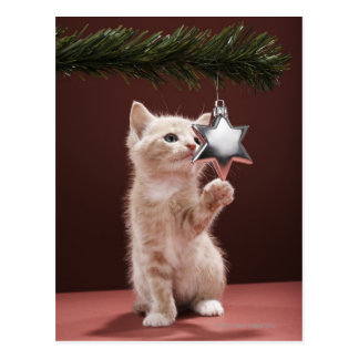 Kitten pawing Christmas decoration on tree Postcard