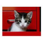 Kitten Peeking Postcard