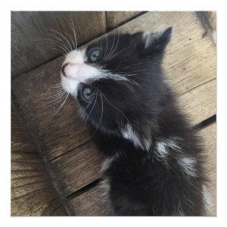 Kitten Perfect Poster