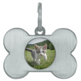 kitten pet ID tag