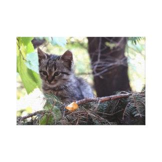 Kitten Photo Baby Cat Single Print