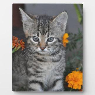 kitten plaque