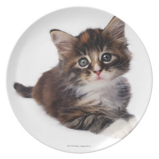 Kitten Plate