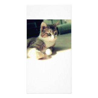 Kitten Portrait Personalized Photo Card