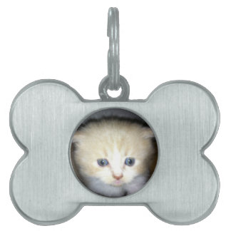 kitten power pet tag