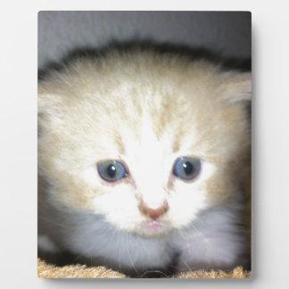 kitten power plaque