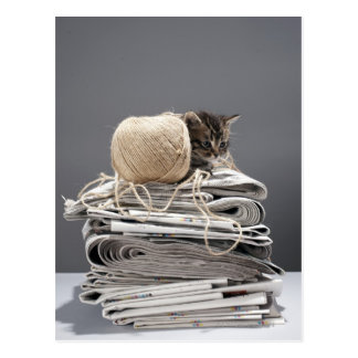 Kitten sitting on pile of newspapers postcard