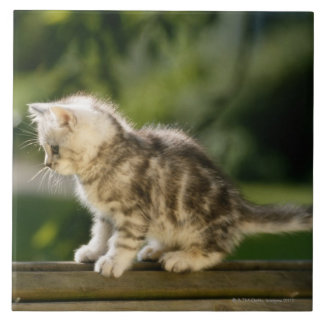 Kitten sitting on top of bench, side view tile