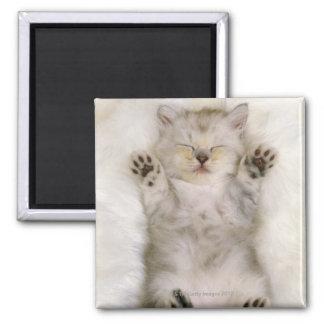 Kitten Sleeping on a White Fluffy Carpet High Magnet