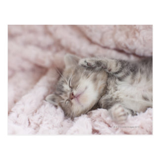 Kitten Sleeping on Towel Postcard