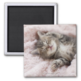 Kitten Sleeping on Towel Square Magnet
