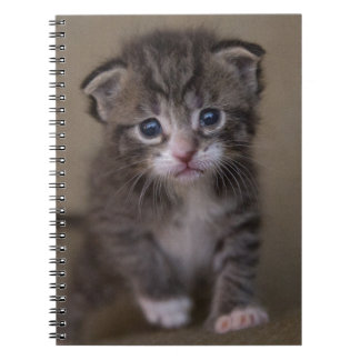 kitten spiral notebook