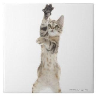 Kitten standing on back paws tile