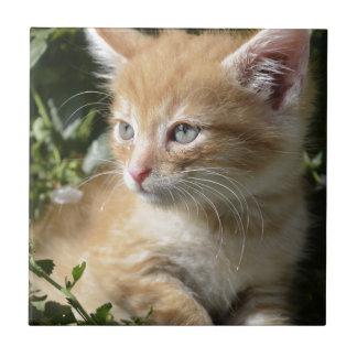 kitten tile