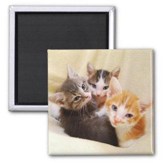 Kitten Trio Magnet