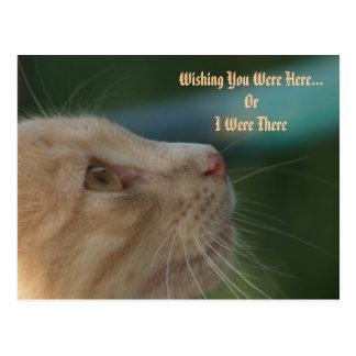 Kitten Wishing You Were Here Post Card