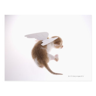 Kitten with angel wings attached to back, rear postcard