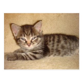 Kitten with Attitude Postcard