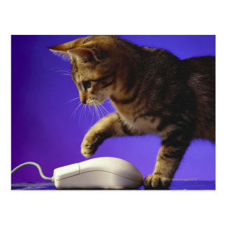 Kitten with computer mouse postcard