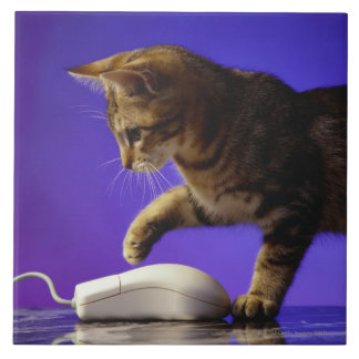 Kitten with computer mouse tile